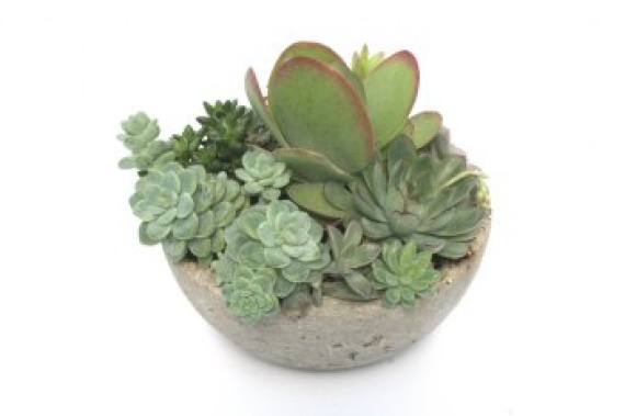 Hand Crafted Succulent Bowl by Bennett Plants-Large